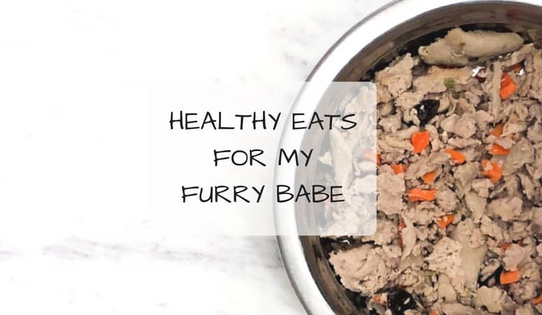 Healthy Eats For My Furry Babe